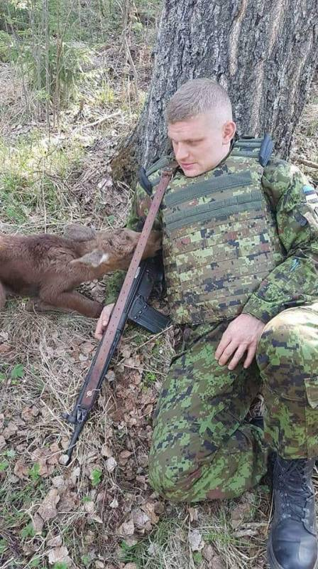 Baby Moose Approaches Soldier In Forest–He Notices It's Trying To Tell Him Something