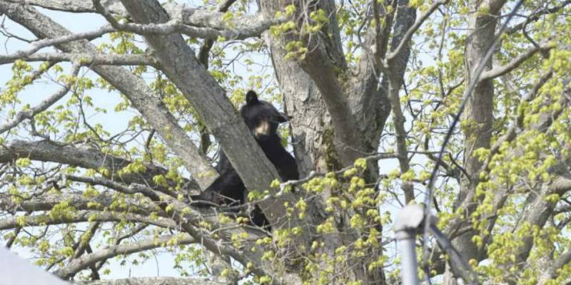 New Hampshire Childcare Center Has Unlikely Guest In Their Playground Tree