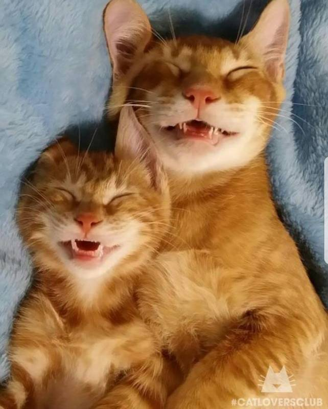 If you are having a terrible day, these sleeping kitties will make you smile again