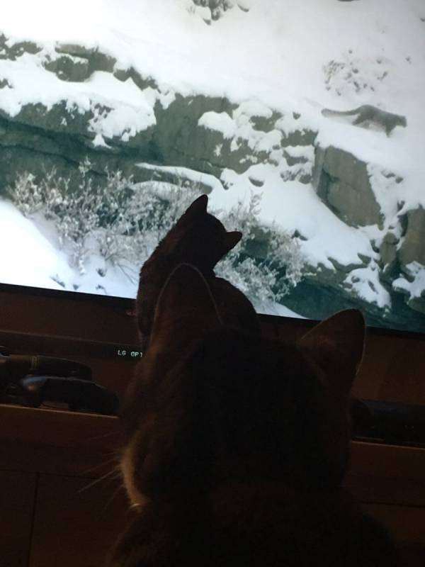 There's A Movement Going On In Britain, House Cats Everywhere Are Transfixed By TV Show